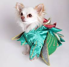 Mr. Piffles, The World's Only Magic Performing Chihuahua