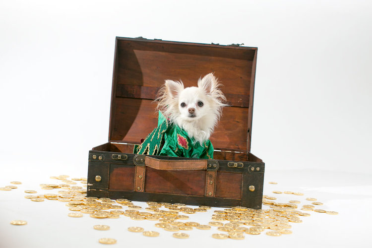 Piffles in Treasure Chest